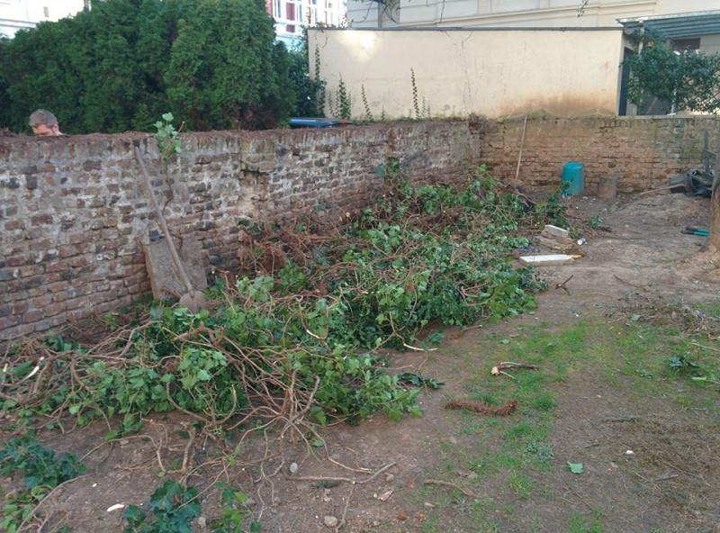 Die Gartenmauer wurde komplett vom Efeu befreit